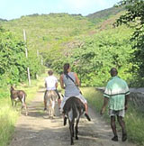 Donkey Treks around Carriacou are also available
